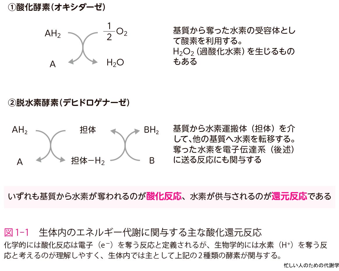 還元 反応 酸化